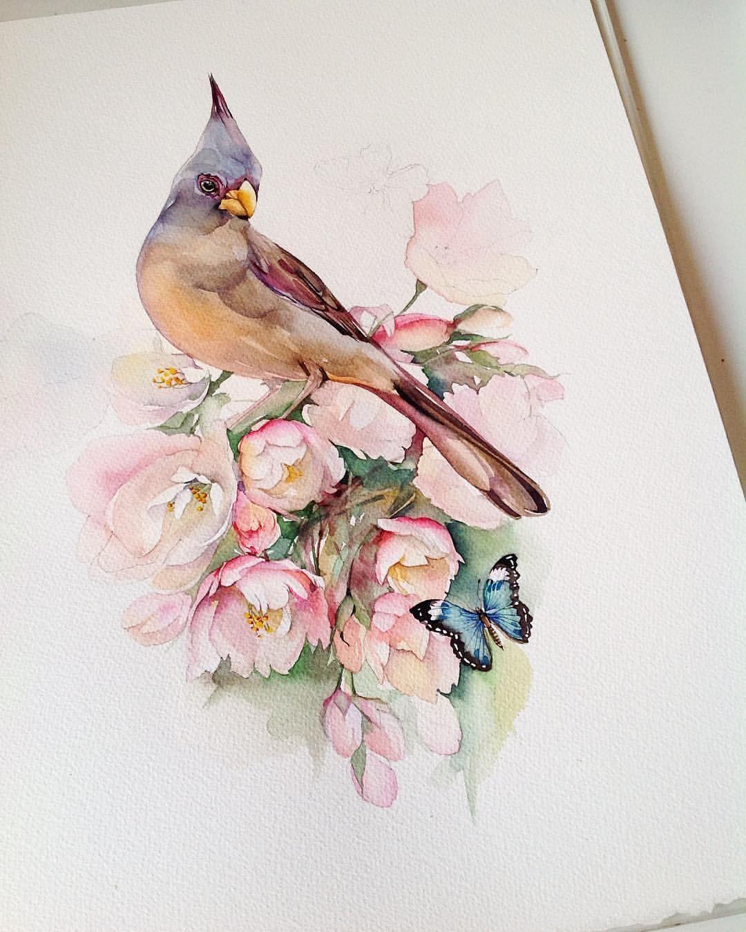 акварель птицы цветы картинки джок терапия широко