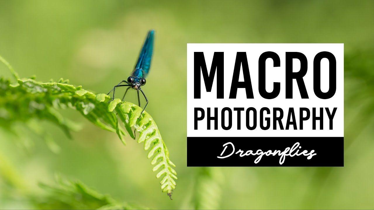 MACRO PHOTOGRAPHY   Dragonflies - VICTORIA HILLMAN