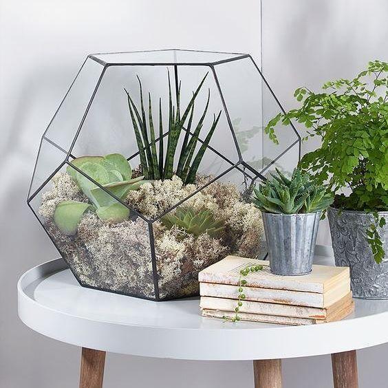 Bonsai Pentagon Dodecahedron Glass Geometric Terrarium Box Tabletop
