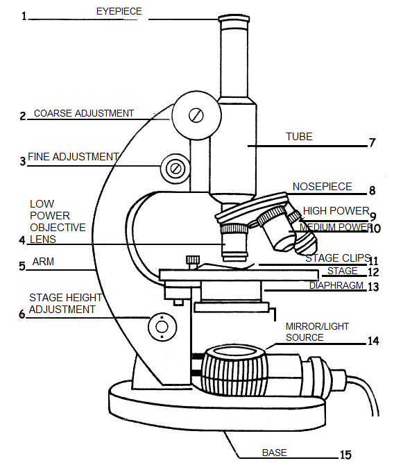 A Labeled Diagram Of A Microscope Mlt 101 Teaching Cells Medical Lab Technician Teaching Science