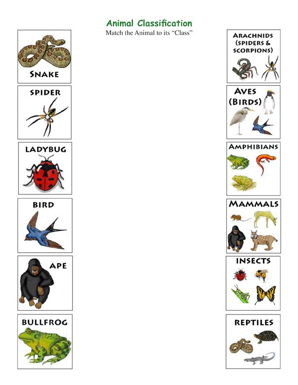 Match the Animal to Its Class Science Activities – Nature of Science Worksheet