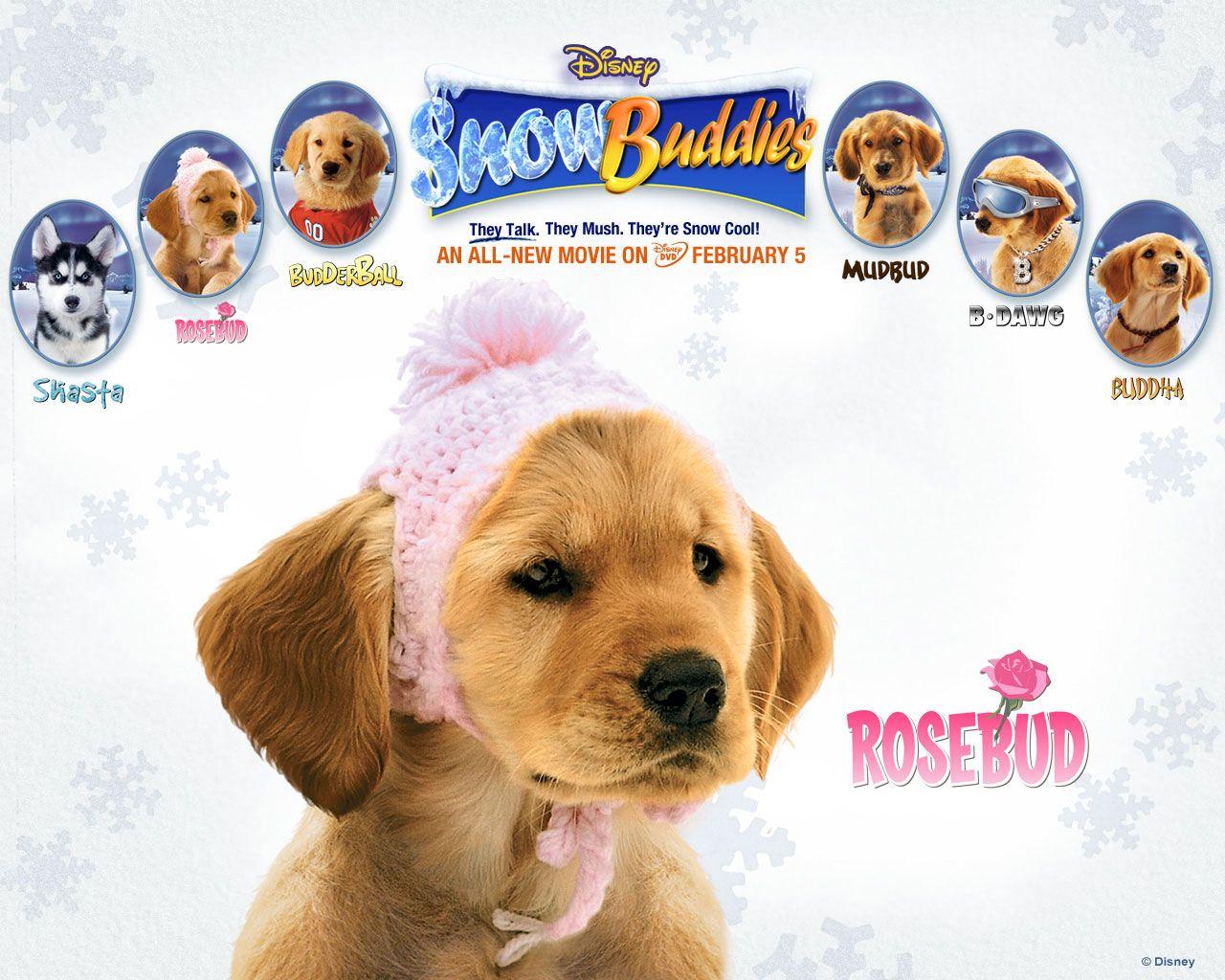 Watch Streaming Hd Snow Buddies Starring James Belushi Jimmy