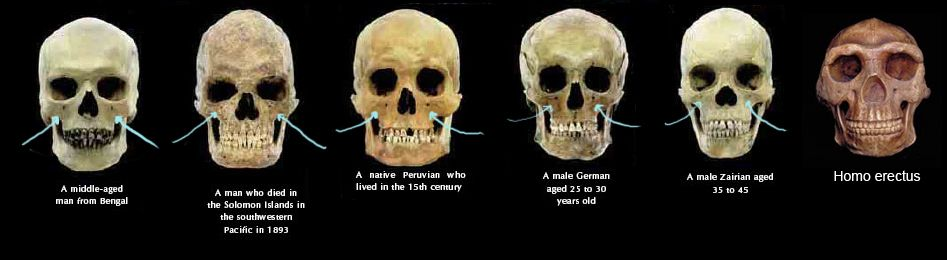 Nothing tell Skull structures different races