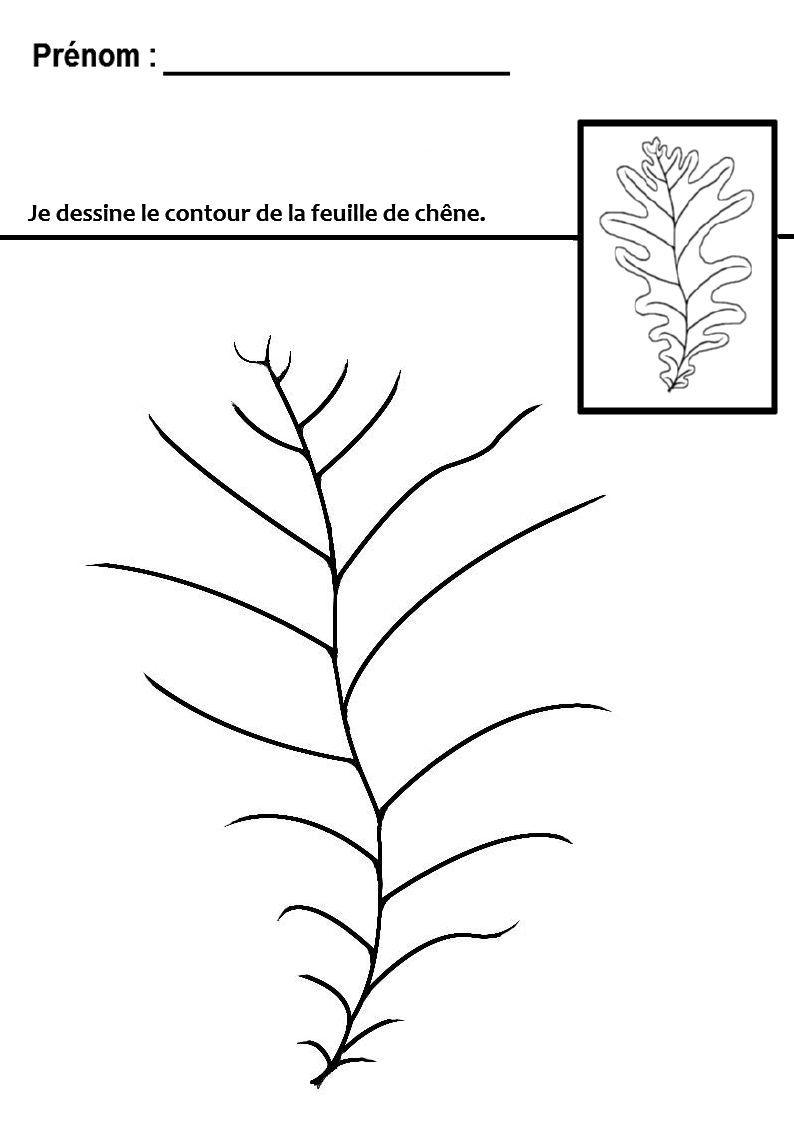 Graphisme en gs et ms tracer des lignes ondul e en maternelle arbre pinterest maternelle - Activite automne maternelle ...