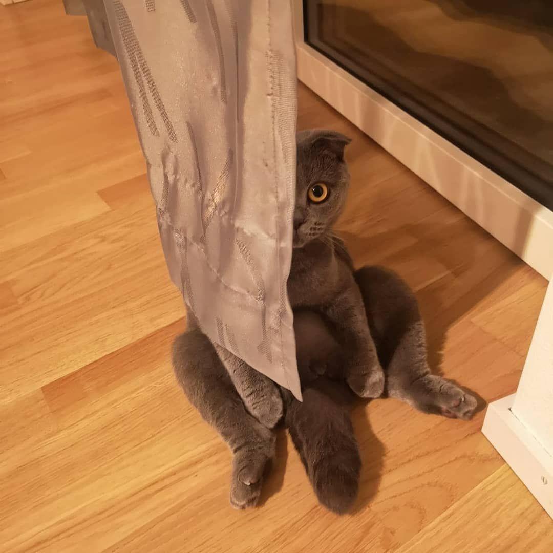 komm spielen wir noch ein bisschen verstecken um mitternacht     kitten  komm spielen wir noch ein bisschen verstecken um mitternacht