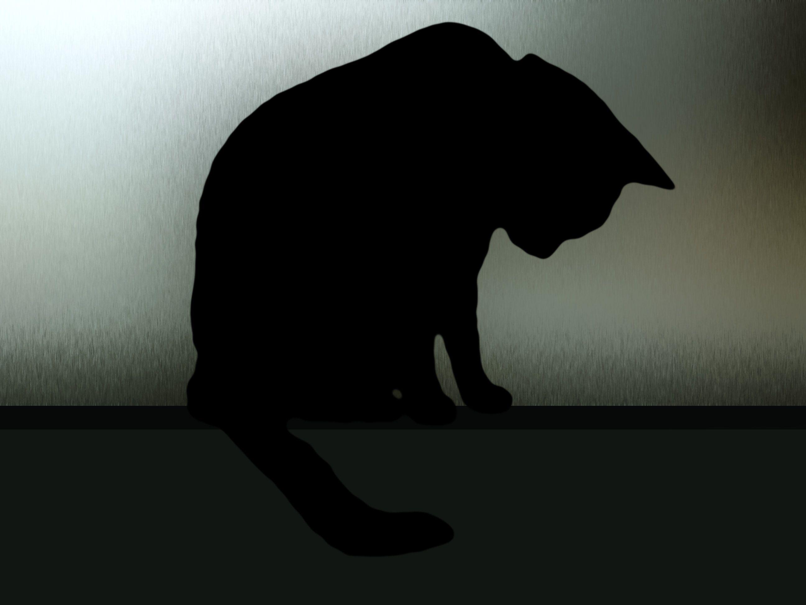A sad cat by ~Ruby125 on deviantART  ruby125.deviantart.com