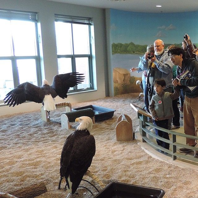 National Eagle Center - Wabasha, Minnesota