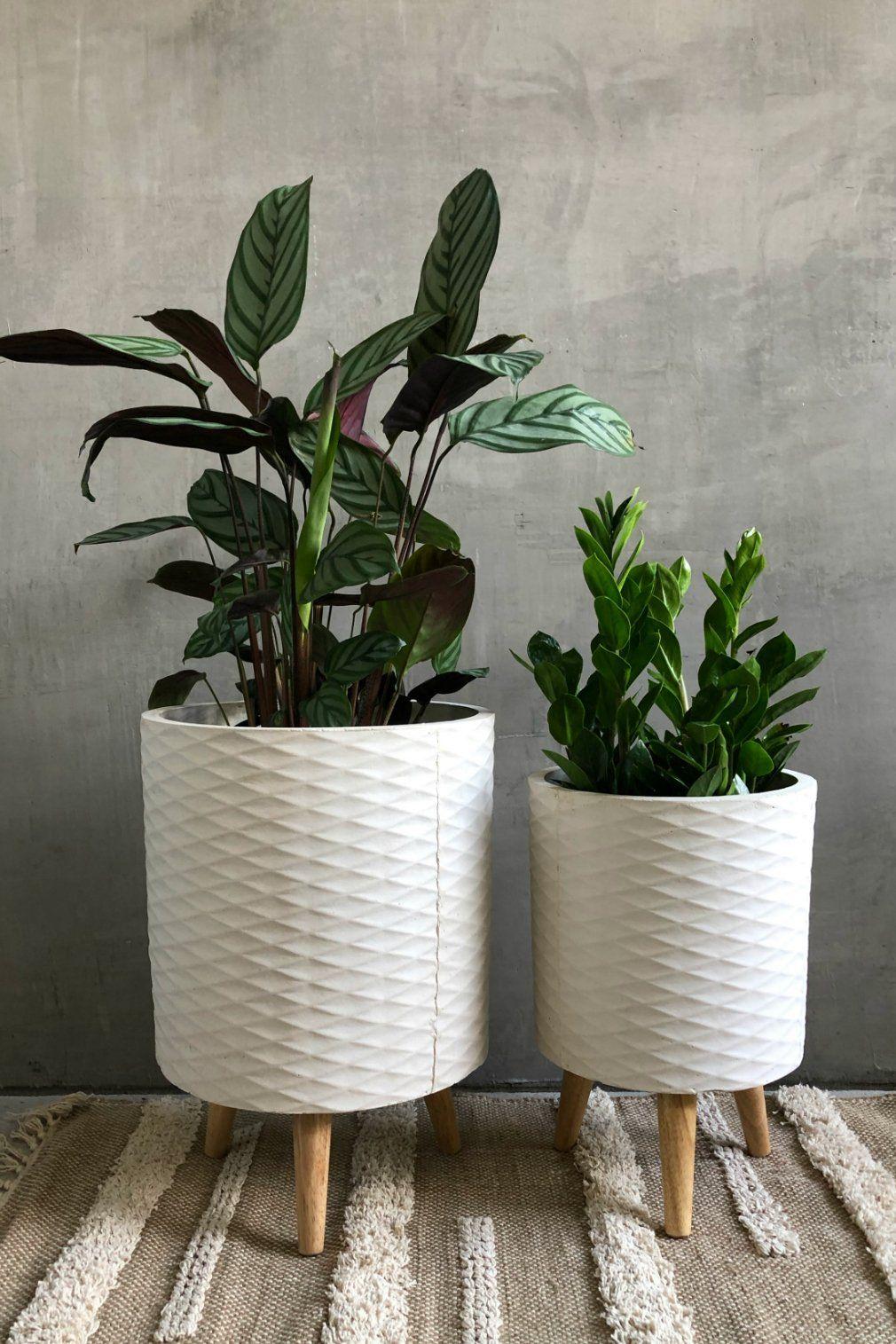 white plant pots on white geo cylinder fiber clay planter indoor flower pots house plant pots plant decor pinterest