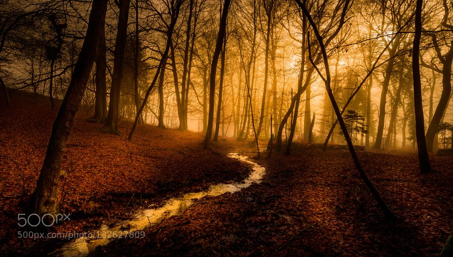 Let Peace Flow - Pinned by Mak Khalaf It could be this simple Landscapes forestlightrivertreeswaterwinter by johnnylu3