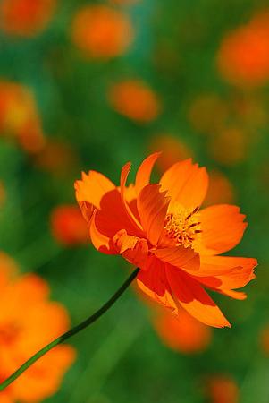 Bright Vivid Orange Flower And Green Grass Occahome Summertime Orange Flowers Beautiful Flowers Flowers