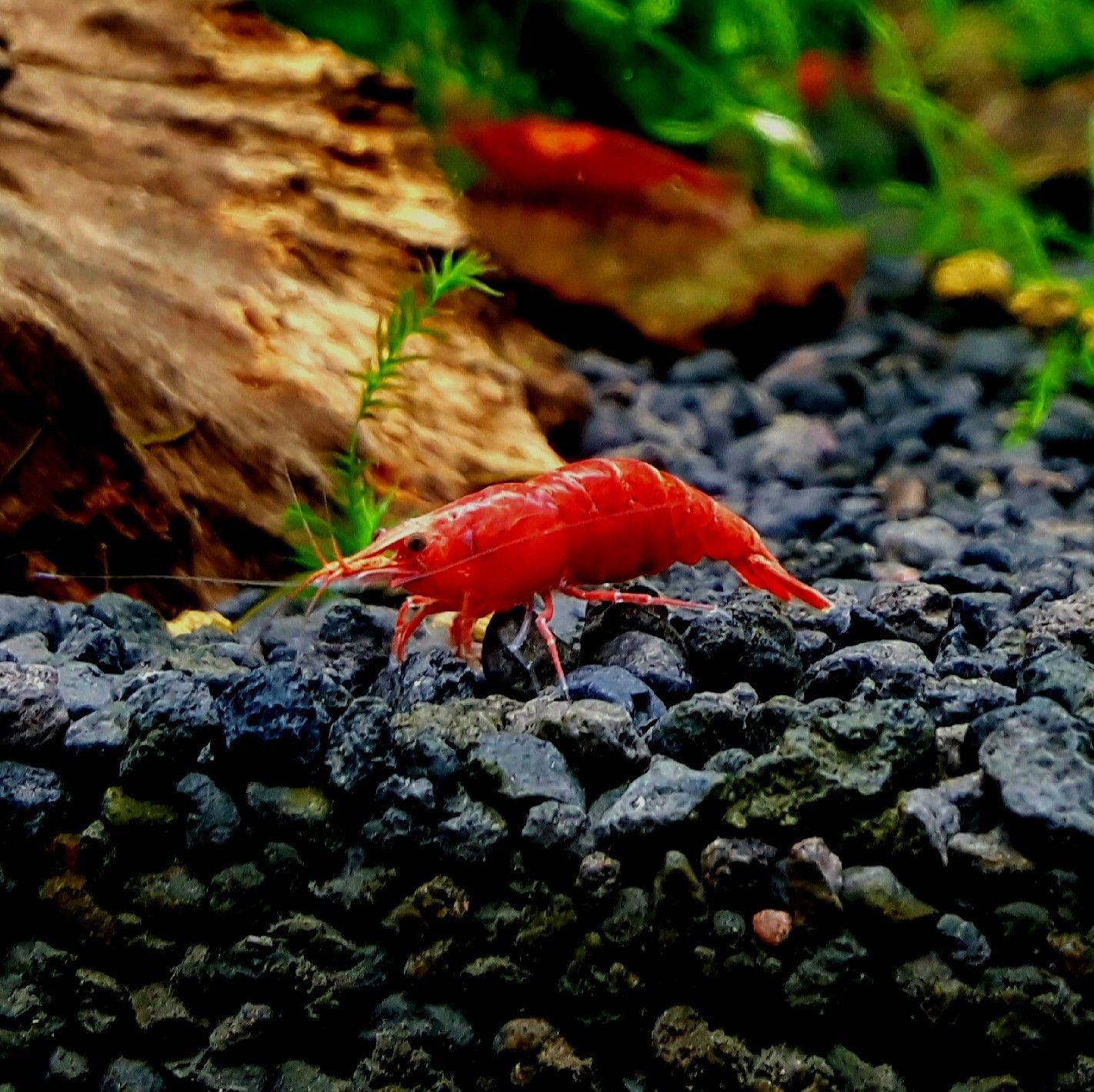 Pin by Huy Nguyá …n on my aquarium Pinterest