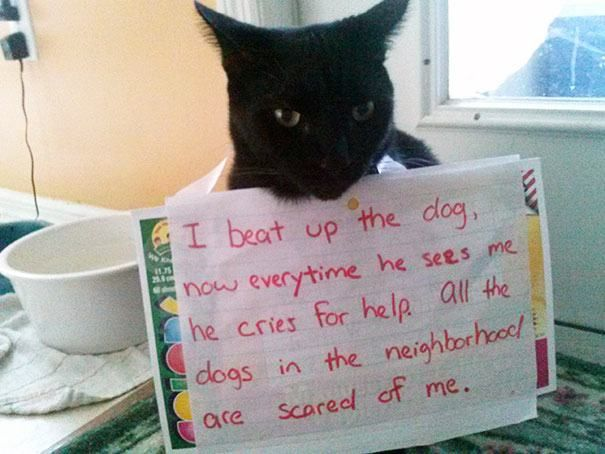 It's not cat shaming if the cat is not ashamed.