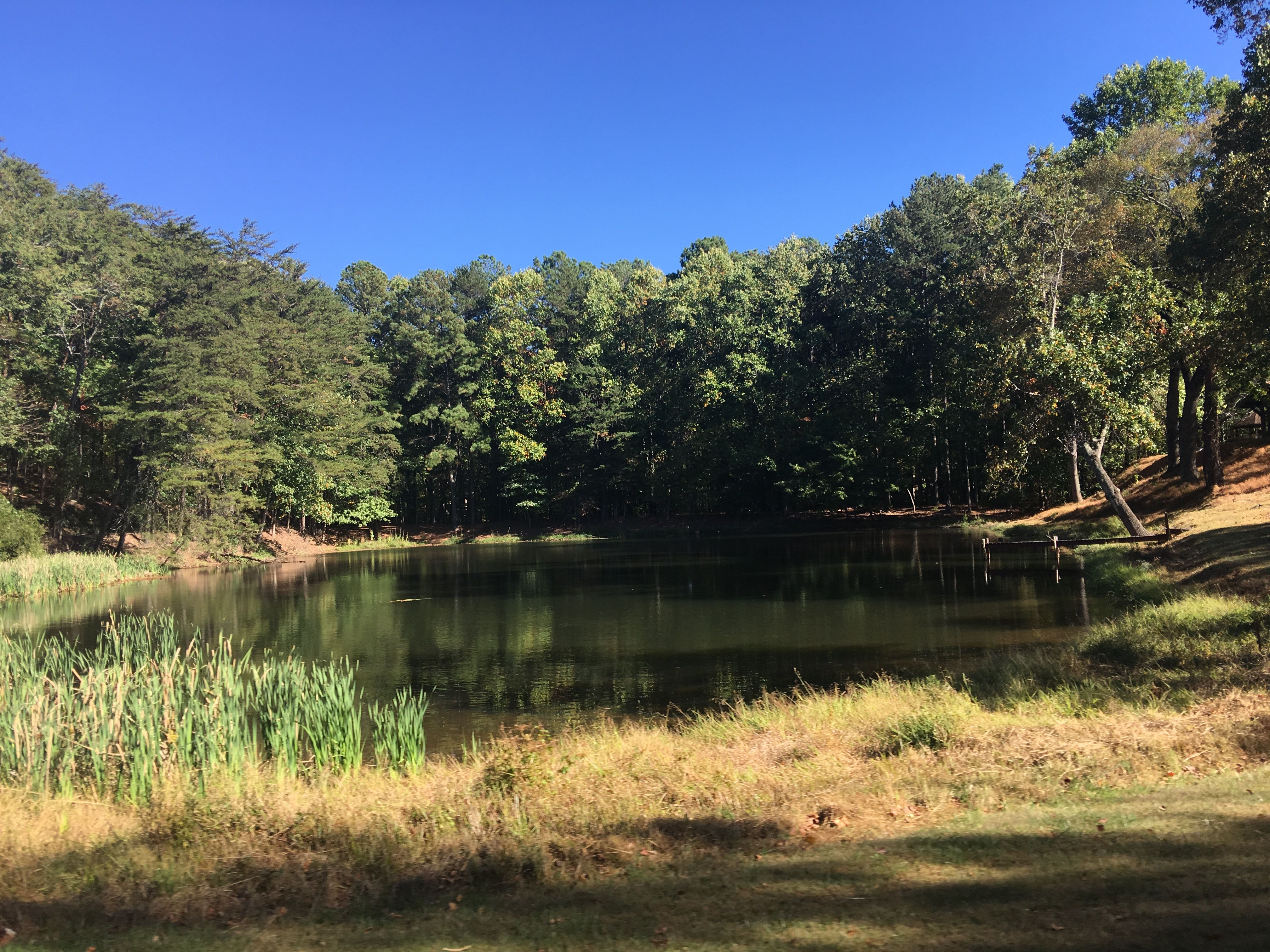 Reflection! Pond on Bent Tree Drive, Jasper GA #jasperpickenscountyga
