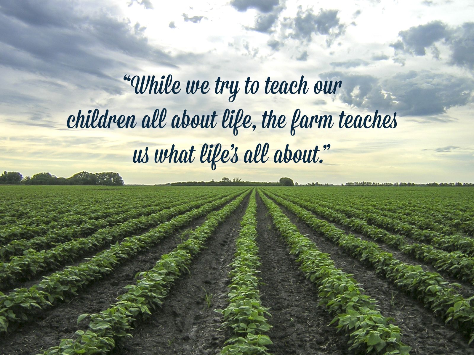 Farm Quotes While We Try To Teach Our Children All About Life The Farm