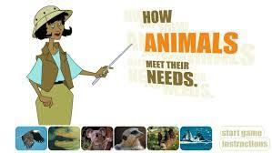 How animals meet their needs?