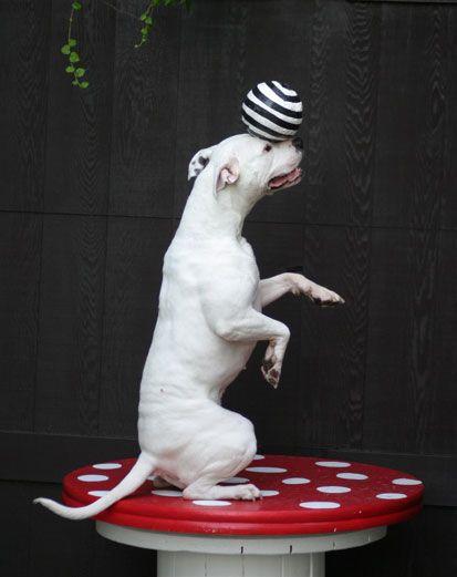 Circus Class Sign Up Form   I love animals!   Circus poster