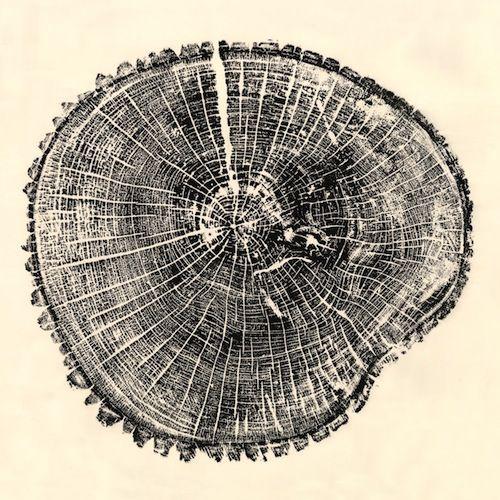 Wood_Natural_Curiosities_High_Point_Market