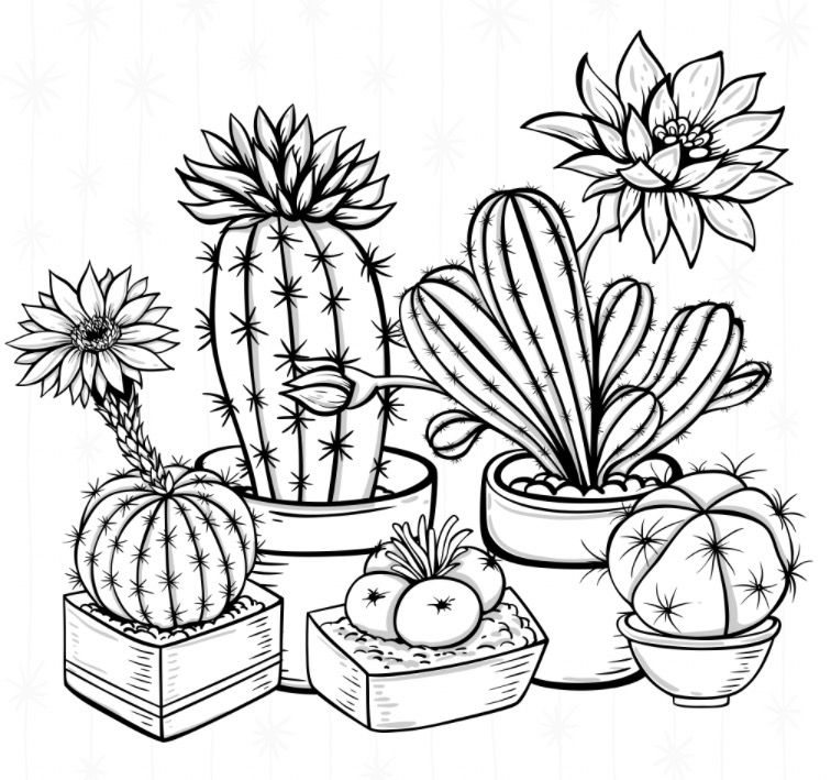 Cacti colouring page   Recolor app   Pattern coloring ...  Cactus Flower Outline