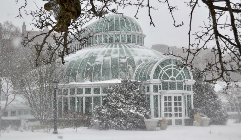 Brooklyn Botanic Garden Is Offering Free Admission All