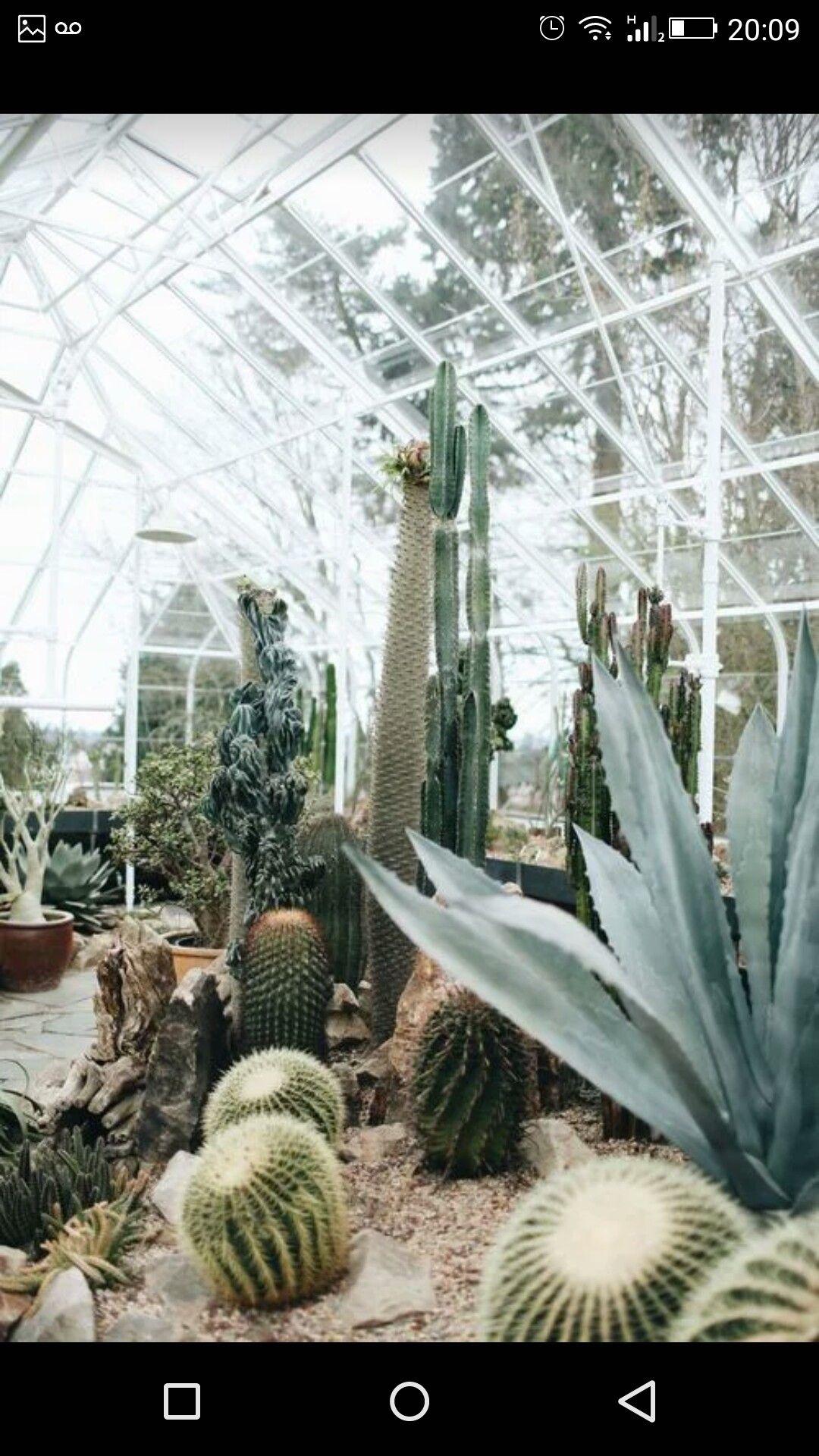 Pin Von Franz Welte Auf Gewachshaus Kakteen Pinterest Kaktus