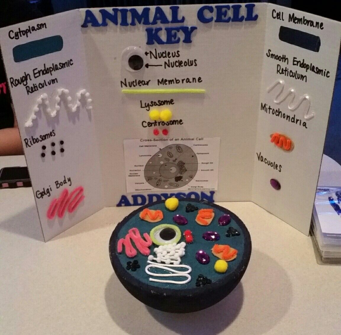 Animal Cell Project Capturing Kids Hearts Social Contract 3d Plant Diagram