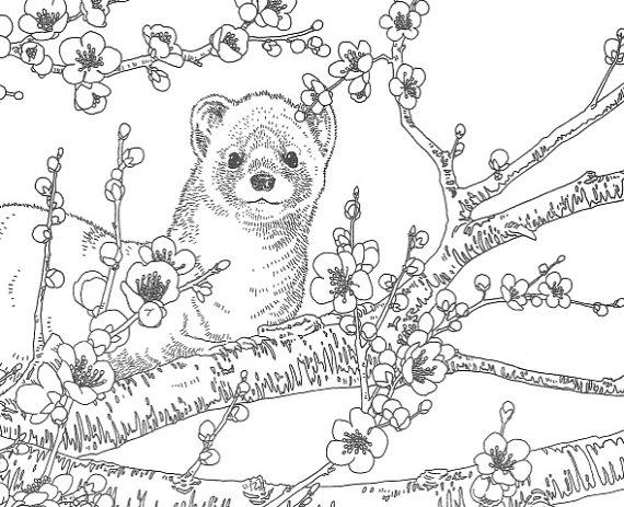 Libro de colorear de Coloriage Animales de mi por JapanZakkaILOILO ...
