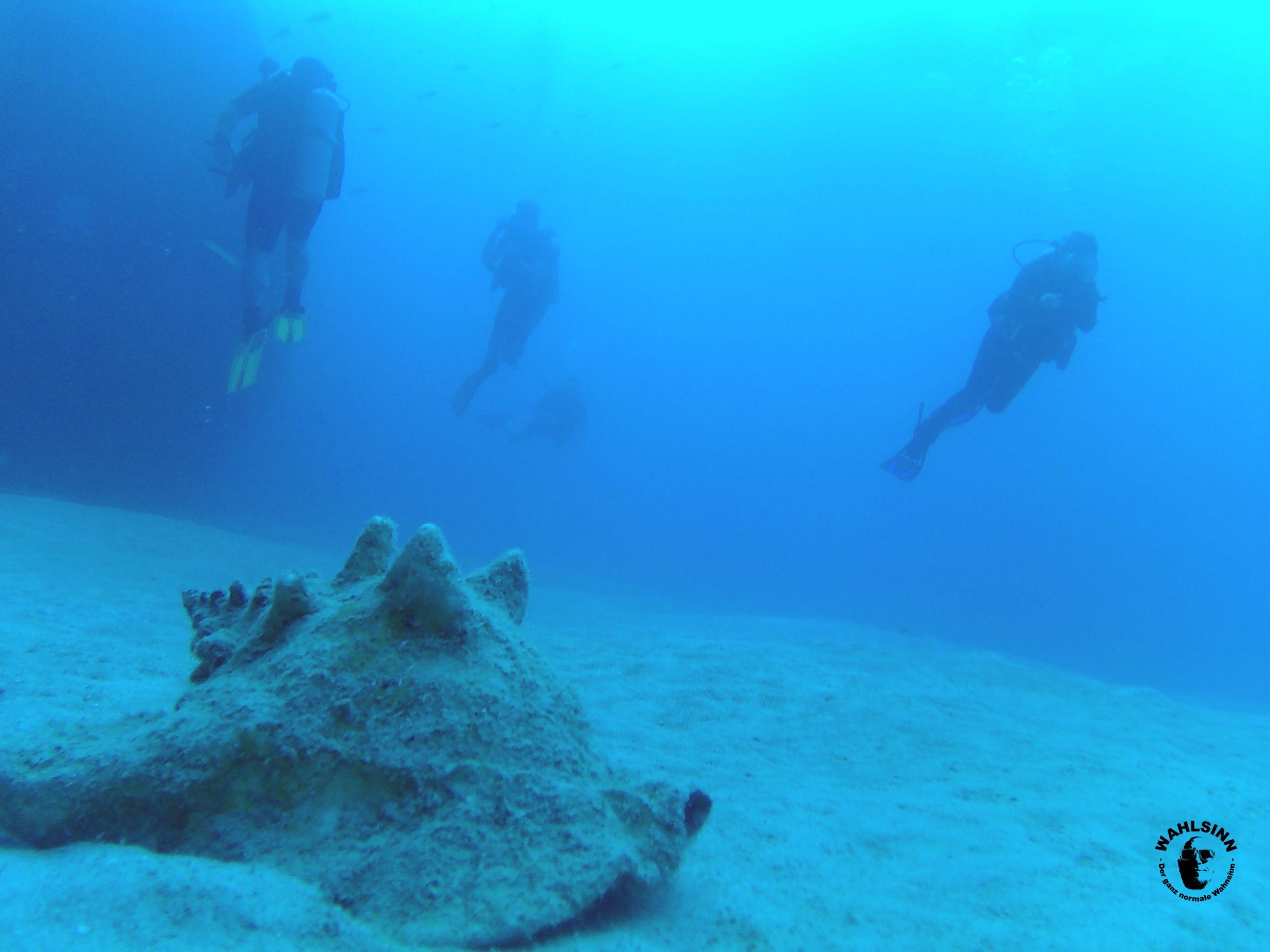 Aruba - geile Sichtweiten beim Tauchen und schöne Muscheln gibts da auch. Manchmal sogar mit Inhalt.....