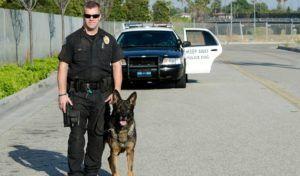 15 Most Popular Police Dog Breeds Police Dogs Police Dog Breeds Service Dogs Gear