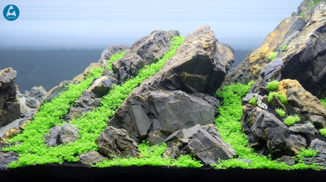Nano akwarium xx Аквариум pinterest nano aquarium