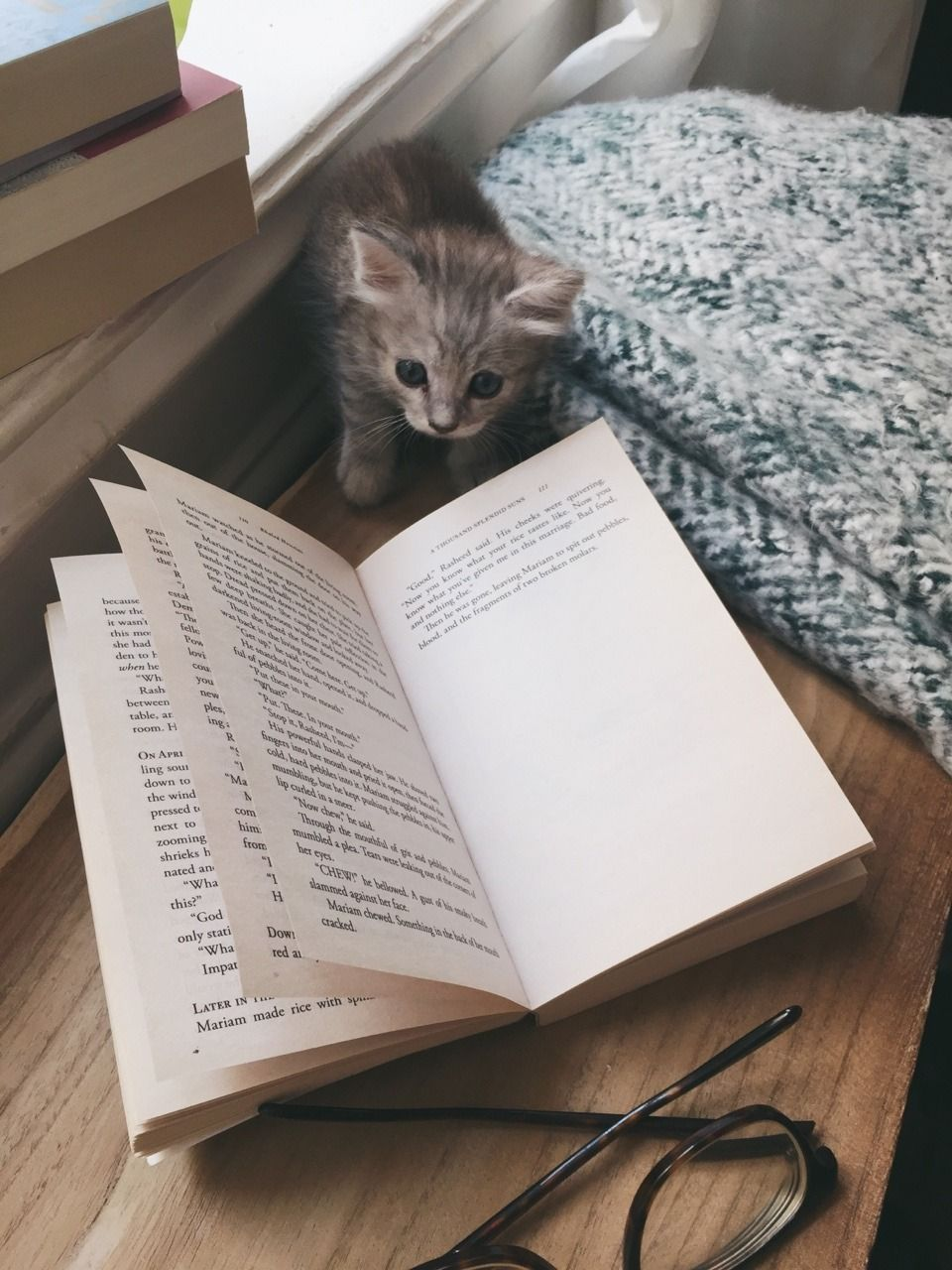 Books Coffee Tea Kitty And Me Oh And Wine Cat Quotes Books Cat Books