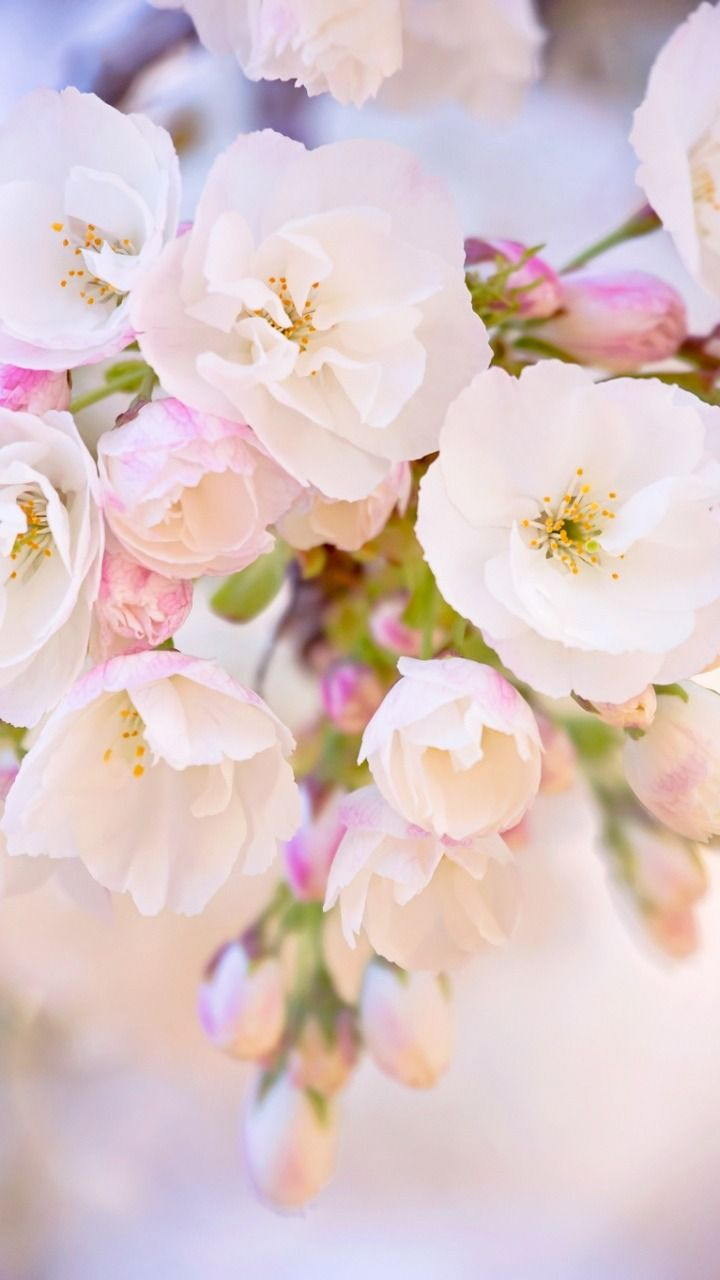Magical Moments   Tumblr flower, Spring wallpaper, Spring ...