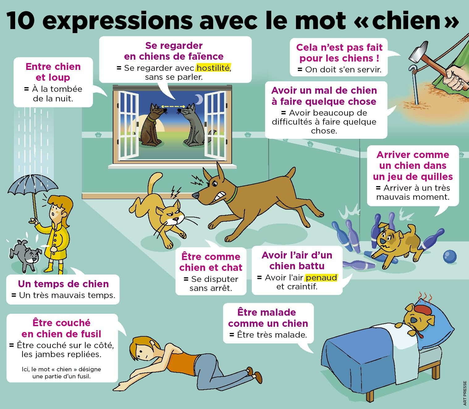 15 wyrażeń ze słowem PIES - wyrażenia 2 - Francuski przy kawie