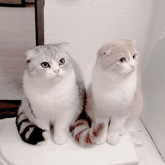 Epitome Of Cattitude Taylorswift Pretty Cats Baby Cats Cats