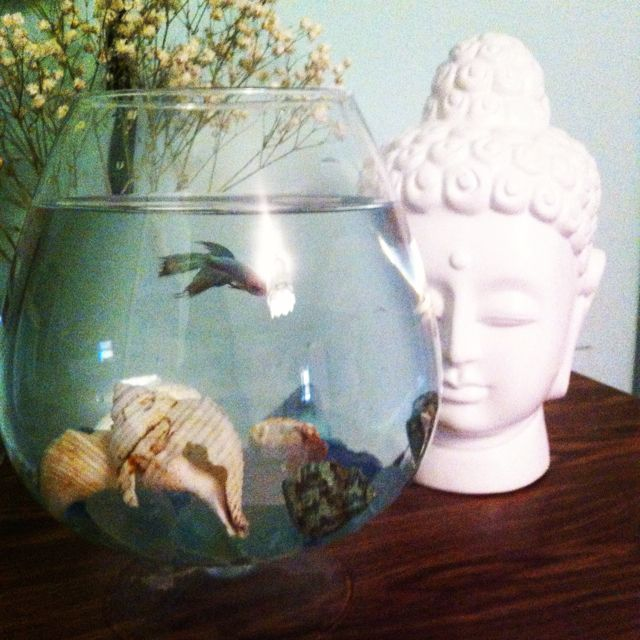 My fish bowl out of shells oversized brandy glass diy for Fish bowl ideas