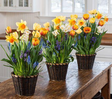 Garden specials flower coupon white flower farm bulbs tubers garden specials flower coupon white flower farm mightylinksfo