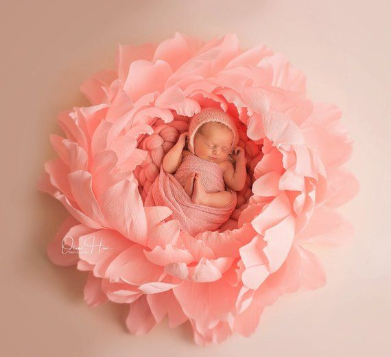 Newborn Baby Photography Props  Giant Paper Peony  Baby