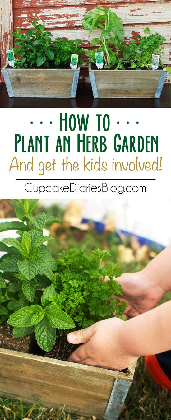 How to Plant an Herb Garden {And Get the Kids Involved!} + GIVEAWAY - Cupcake Diaries