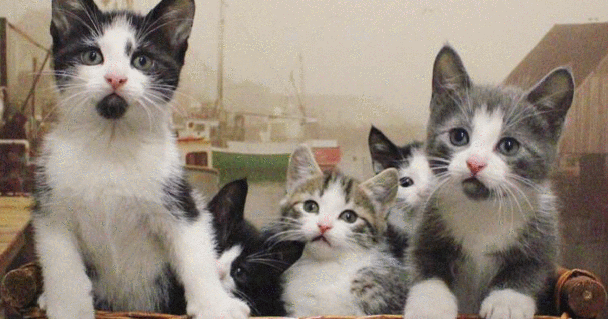These Cats Kittens Could Be Left To Die When Humans Leave Their Canadian Island Photos In 2020 Feral Cats Cats Cats And Kittens