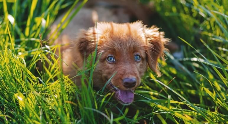 Ask The Experts Top 3 Reasons Dogs Eat Grass Proud Dog Mom Dog Allergies Dog Images Pet Dogs