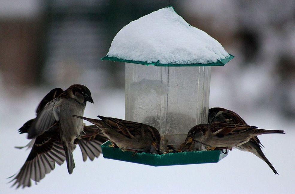 картинки на тему помощь животным зимой легенд
