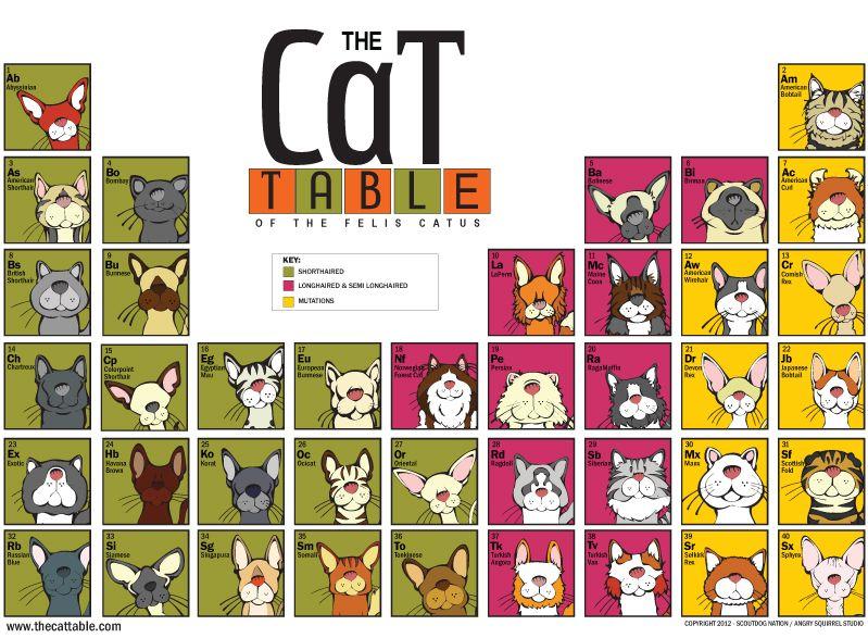 The cat table of the felis catus features 40 cat pedigree breeds the cat table of the felis catus features 40 cat pedigree breeds recognized by the cat urtaz Gallery