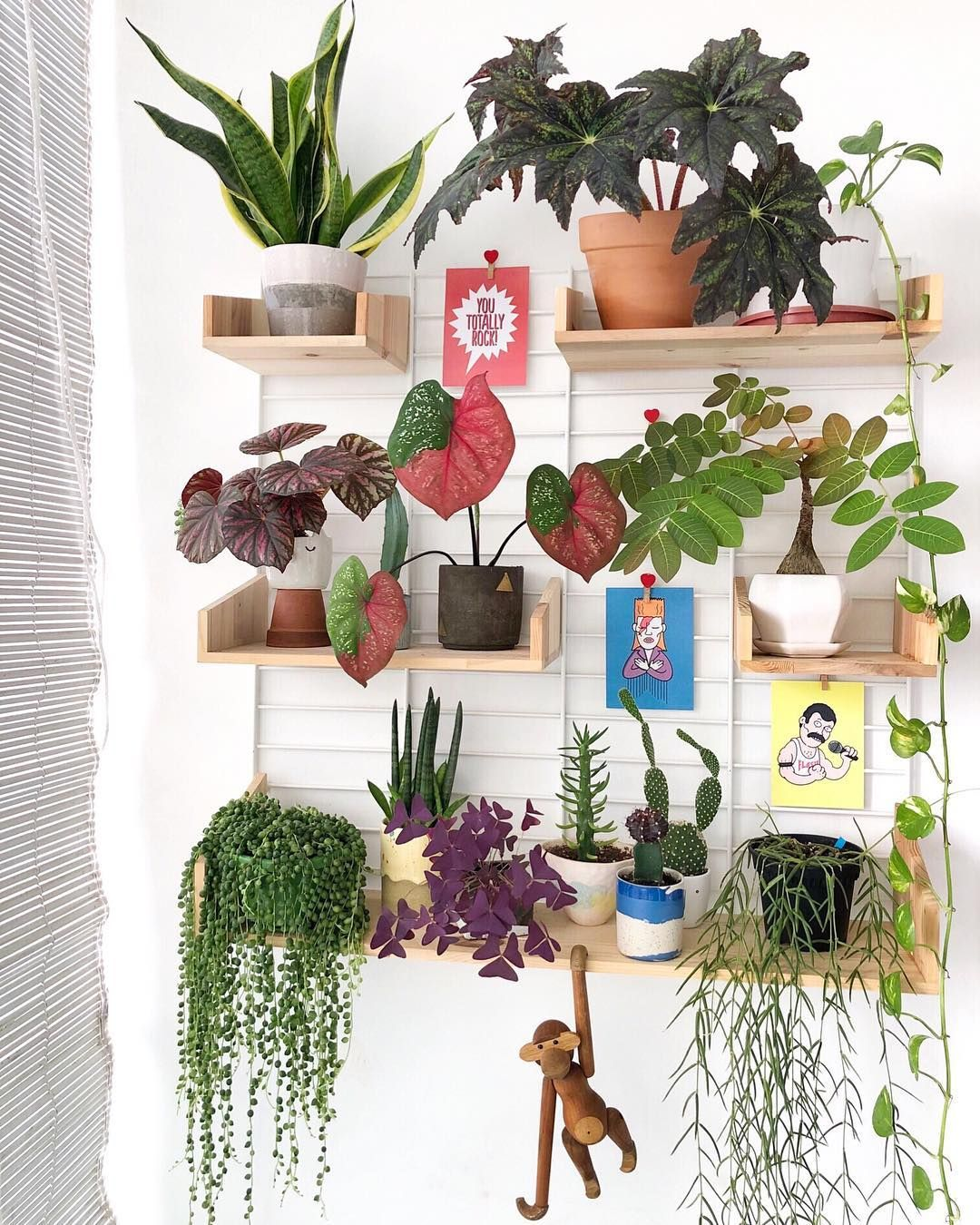 fabulous plant shelfies plantastic pinterest plants indoor