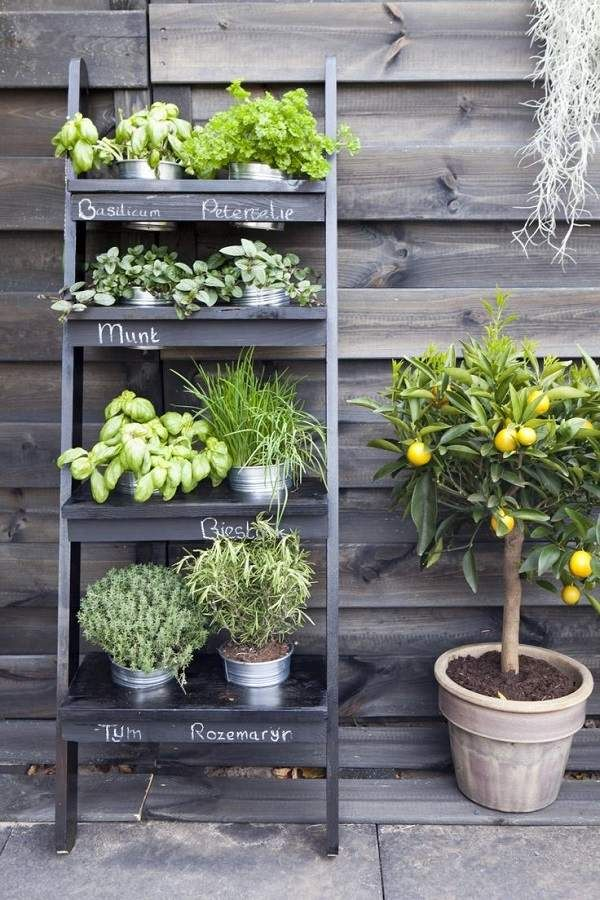 front yard landscaping ideas metal shelf with plants