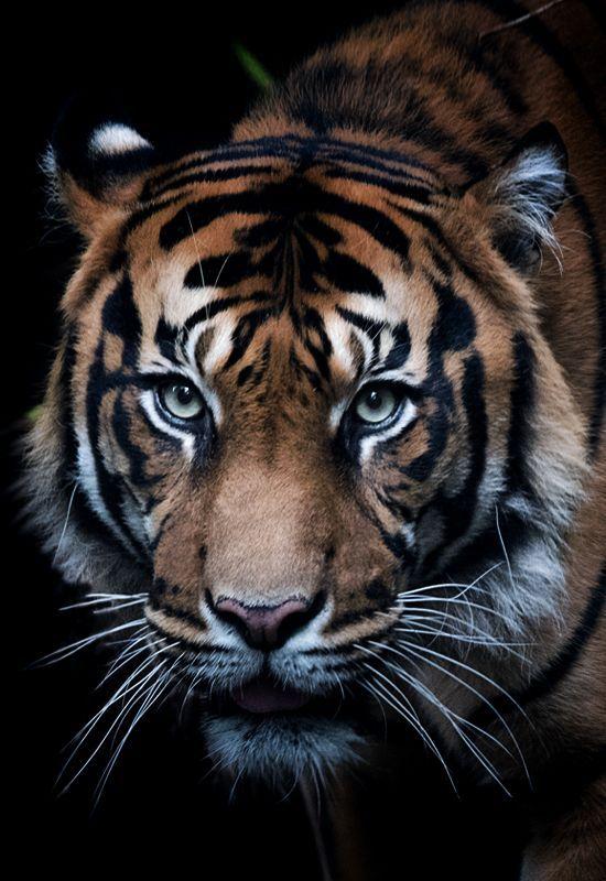 Unreal On Twitter Bgsnezana Hello Snezana My Dear Friend Especially For You My Tiger I Wish You Tiger Photography Dangerous Animals Animals