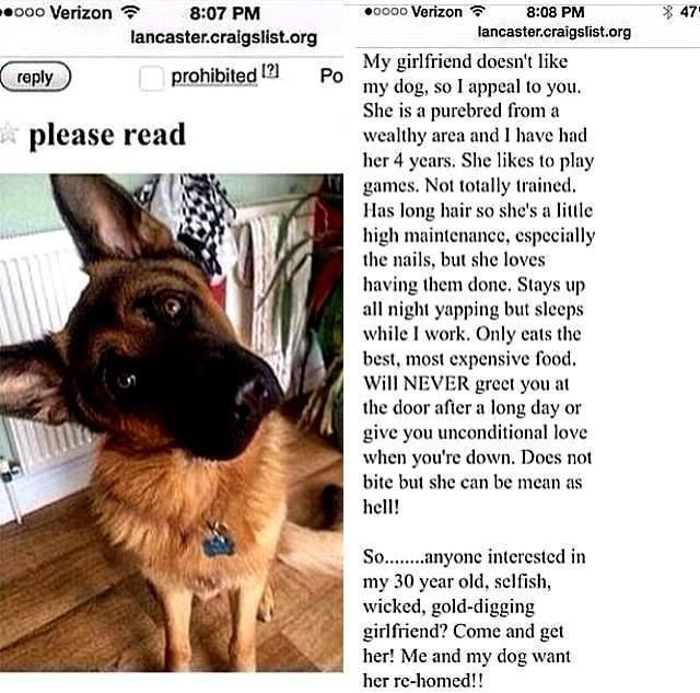 Craigslist Maine Personals By Owner - Pets and Animal ...