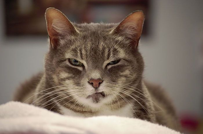 Chat Furieux 20 chats furieux contre vous 2tout2rien | animaux | pinterest