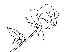 Resultado de imagen para rosas rojas para dibujar  Cosas que
