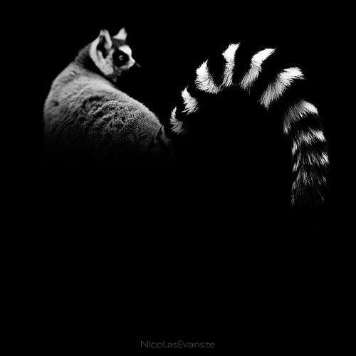 Dark Zoo