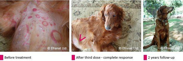 cutaneous t cell lymphoma canine iOPo4T8J I had no idea a