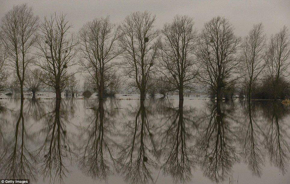 Trees are reflected in flood waters on the Somerset Levels on January 29, 2014 near Langport in Somerset